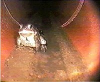 Sewer Inspection Camera - Frog