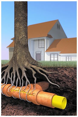Roots in Sewer Lines