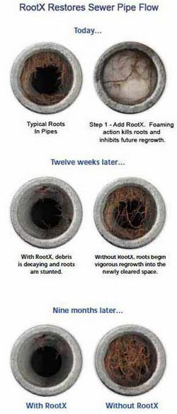 Root-X Action on Tree Roots
